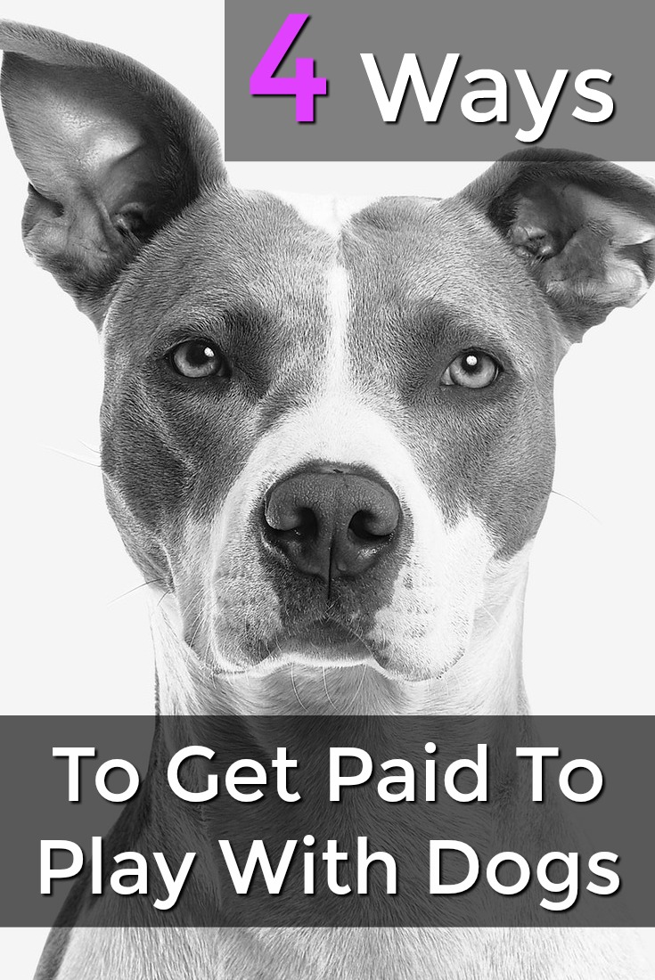 Did you know you could get paid to play with dogs? Here're 4 ways you can make an extra income taking care of animals!